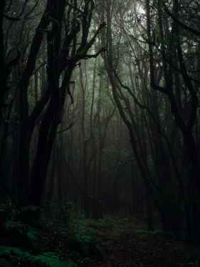 forest photography