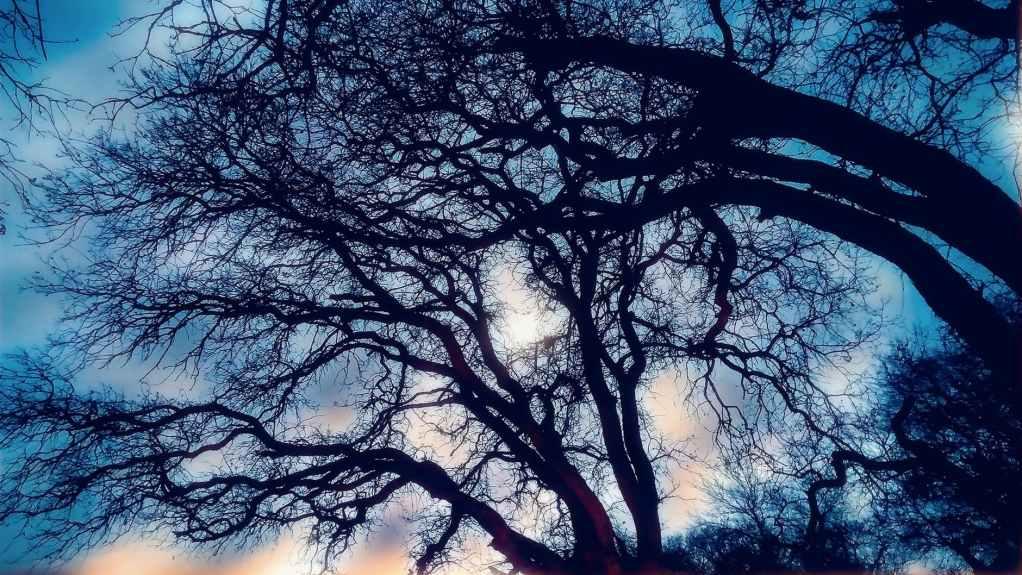 branches dark eerie forest